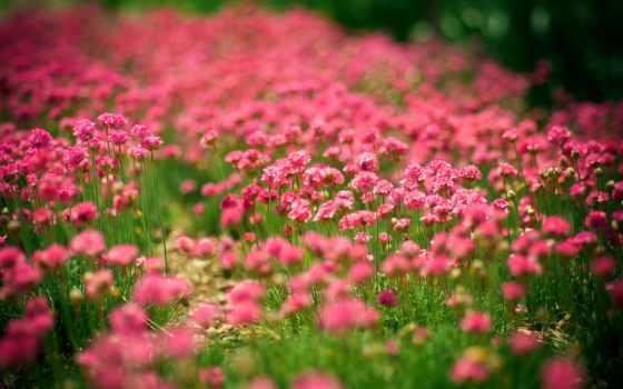 природа, cvety, summer, поляна, sun,