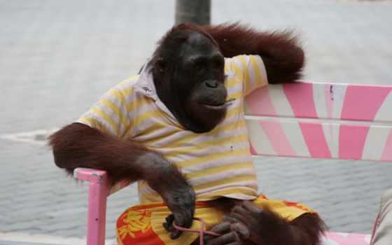 видов, обезьяна