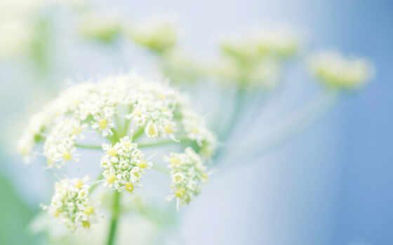 yellow, растение, cvety, светлые, fone, высоком,
