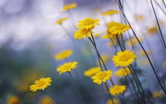 cvety, природа, луг, оригинал, ваше, добавить