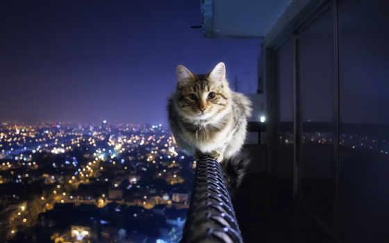 cat, hd, wallpaper, خلفيات, cats, house, night, can, walk, الصورة, anywhere, cityscapes, fotos, animals, القطط, wallpapers, اجمل, ipad, city,