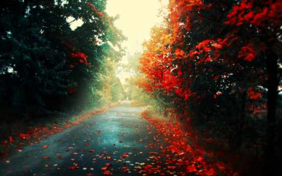hd, wallpaper, wallpapers, autumn, road, desktop, trees, дорога, تصاویر, العاده, خارق, زیبا, осень, widescreen,