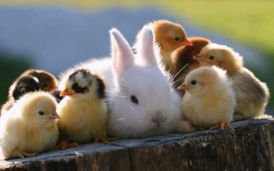 животных, дружба, чуть