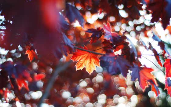фотографий, изображение, листья