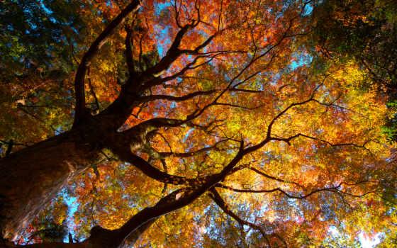 осень, деревья, природа