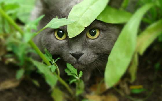 кот, кошки, zhivotnye, разное, крадется, трава, страница, траве, свет,