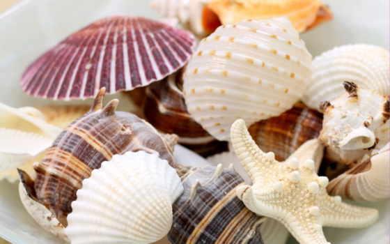 ракушки, морская, морские, star,