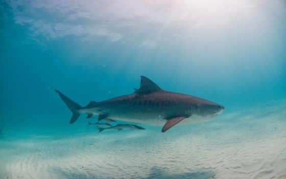акула, hai, animal, хищник, für, kostenlos, hintergrundbilder, underwater