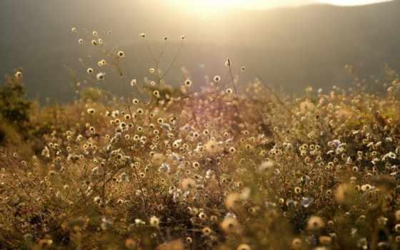 цветы, sun, горы