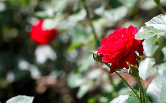 цветы, природа, summer Фон № 70780 разрешение 2560x1600