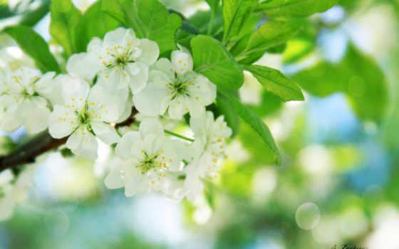цветы, цветущая, февр