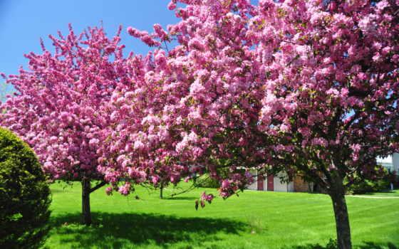 весна, февр, цветение