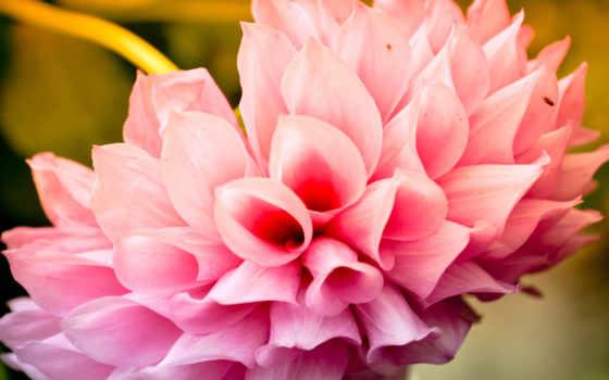 цветы, cool, flowers