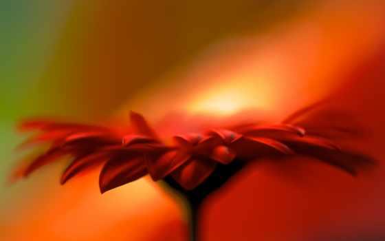 оранжевый, photos, flickr, tags, цветы, idris, suresi, abkar, fussilet, merkezi,
