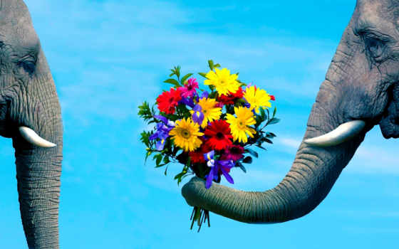 cvety, слон, ствол, pair, забота, романтика, компьютера,