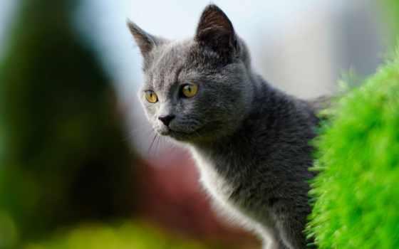 котенок, gato, взгляд, fondo, морда, боке, кот, кошки, animales,