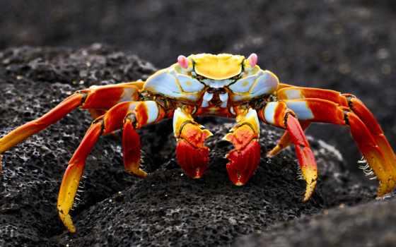 crab, коллекция, marine, release, камень, море, смотреть, user, биг, ultra