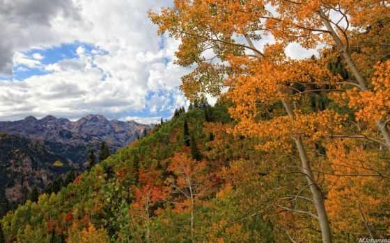 природа, деревья, осень