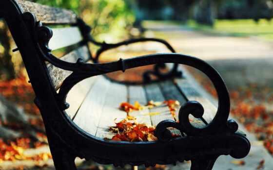 осень, листва, park, скамейка, природа, настроение, поздняя, боке, девушка, парень,