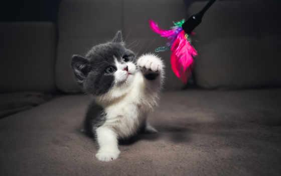 серый, котенок, zhivotnye