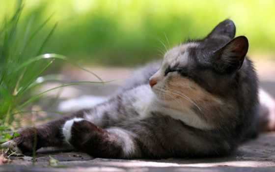 кот, лежит, трава, отдыхает, отдых, спит, panther, хищник, спать, дикая,