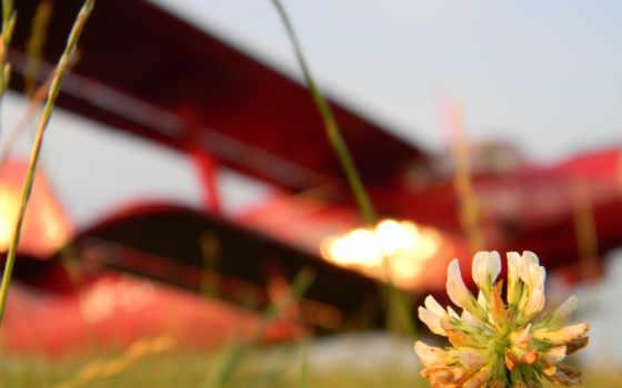 цветок, авиация