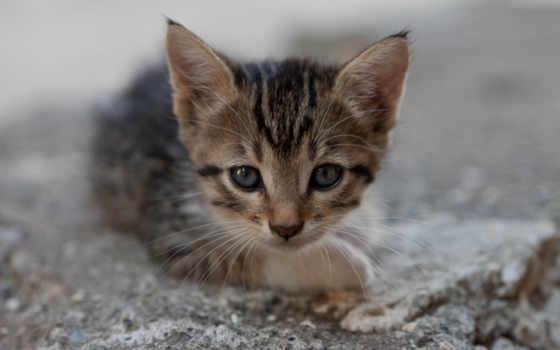 котенок, мордочка, кот