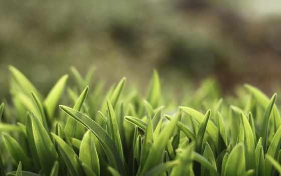 трава, трава, зелень, leto, priroda, растения, sunshine, макро, природа, depth, поле,