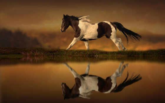 лошадь, лошади, воде