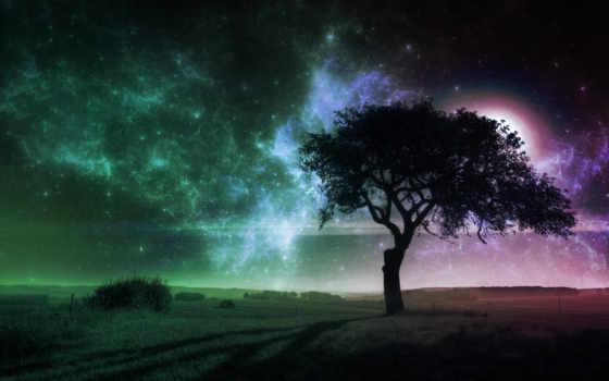 дерево, поле, одинокое