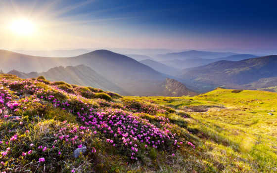 горы, цветы Фон № 22477 разрешение 2560x1707