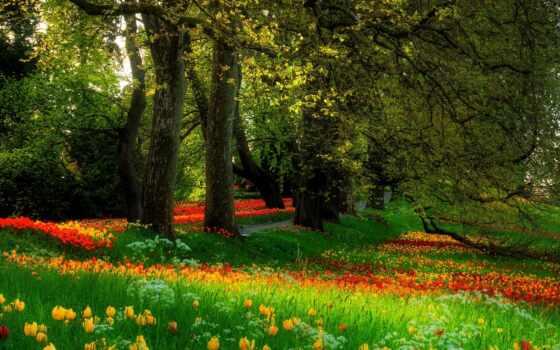 цветы, деревья
