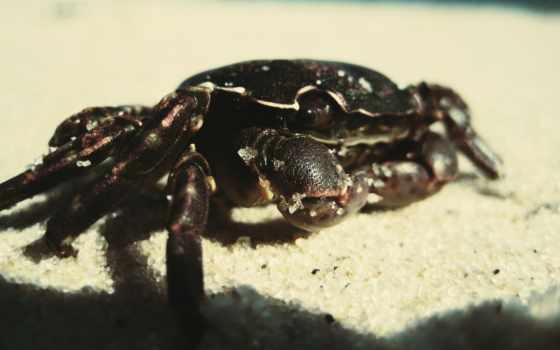 crab, зооклубе, ocean