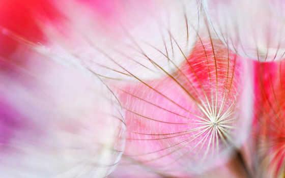 pretty, flowers, цветы