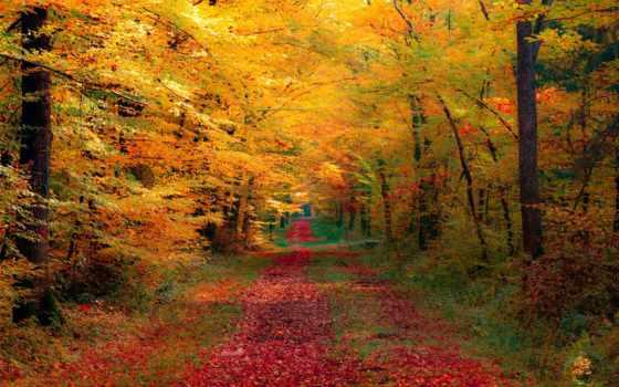 осень, лес, desktop