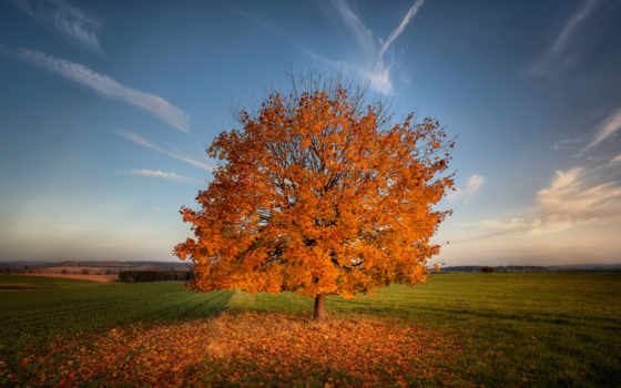осень, поле, трава, природа, дерево, сверху, взгляд,