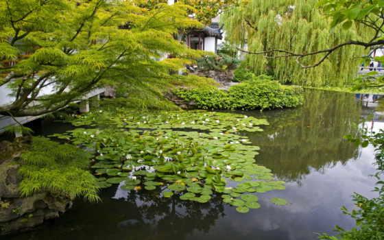 кувшинки, водяные, garden, лилии, selenart, сады, tranh, прекрасные, лотосы, sun,