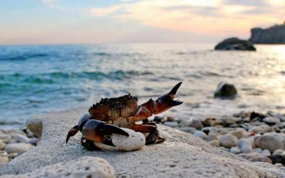 cangrejo, мар, praia, siriguejo, caranguejo, ondas, spinifrons, papel, imágenes, areia,