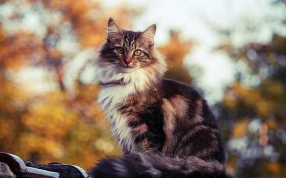 кот, красивые, котэ, pussycat, тюлень, кошки, кошак, кисуля, kotyara, только,