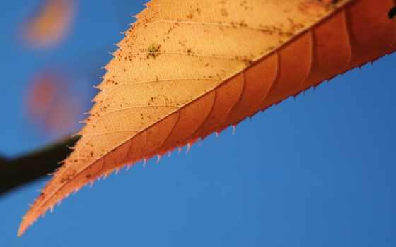 blue, лист, осень, категории, фоны, high, картинка, desktop, resolution, макро,