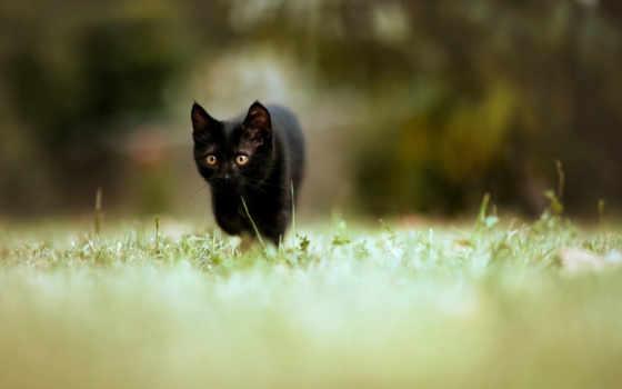 котенок, black, траве