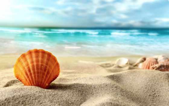 пляж, море, песок, ракушки, природа, zoom, sun, морские, seashell, звезды,