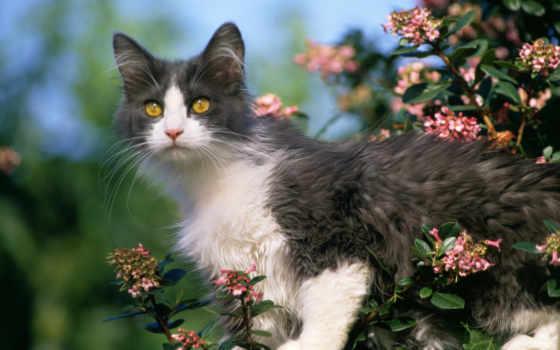 кошки, кошек, hành, тема, cao, miễn, котов, красивые, dynamic,
