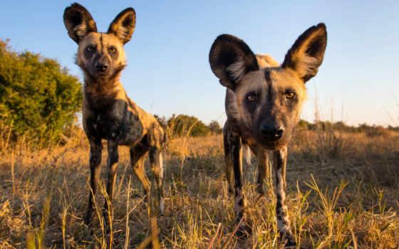 zhivotnye, африки, животных, населяют, необычные, самых, посмотрите, коллекцию, яndex,