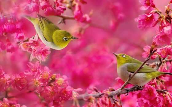 птица, белоглазка, цветы, смерть, силиконовый, fate, source, japanese, branch, картинка, pro