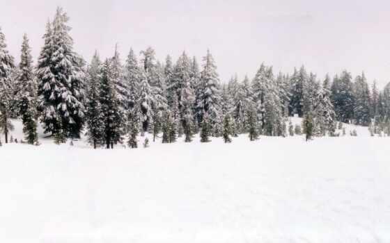 лес, зимний