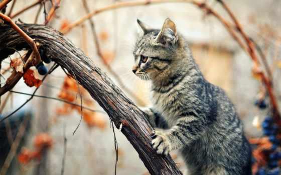 кот, осень, дерево