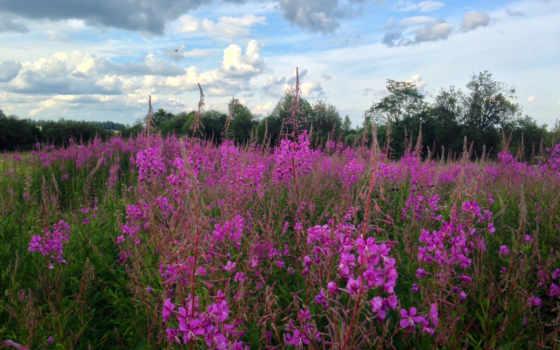 цветущей, красивой, природы,
