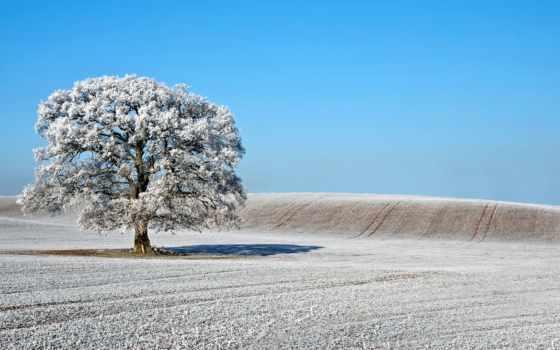 love, иней, поле, природа, дерево, ислам, islamic, allah, терпеливыми, landscape, июнь,