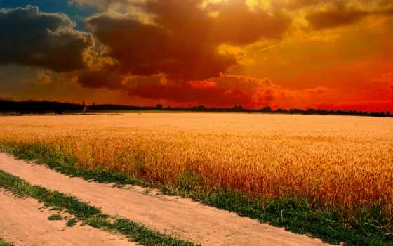 oblaka, небо, поле, колосья, закат, ipad, sun, трава, margin, trees, дорога,